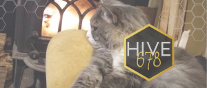 dinah by the woodstove with Hive678 logo
