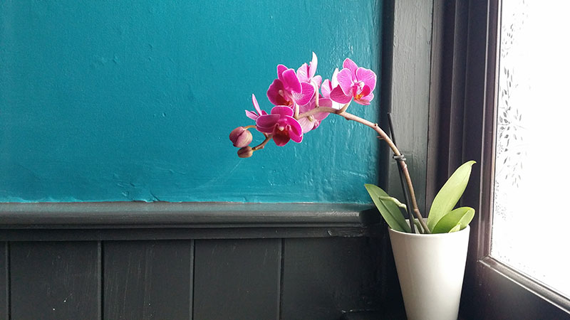 Hive678 bathroom makeover orchid