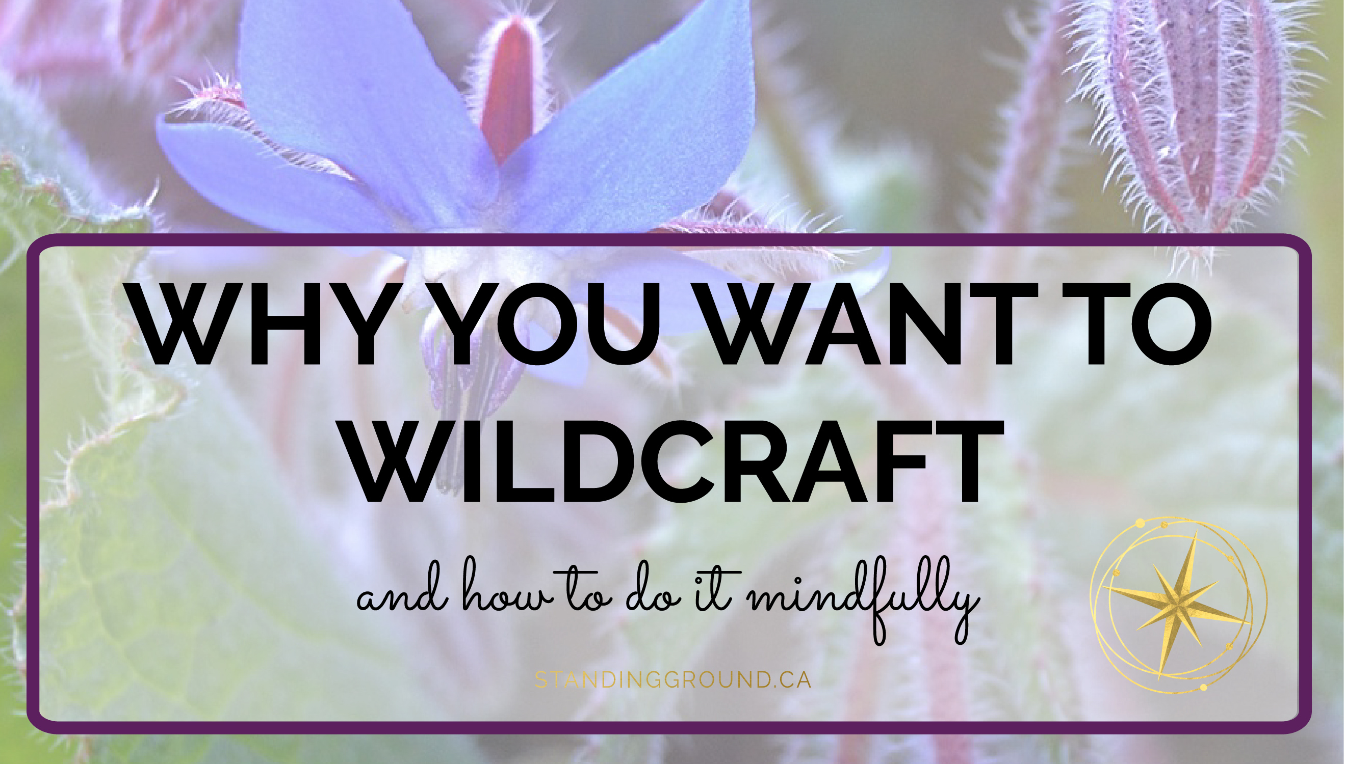 Wildcrafting title image